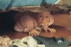 Brittany Snow : brittanysnow_1215139503.jpg