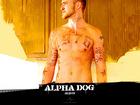 Justin Timberlake : justin_timberlake_1218743302.jpg