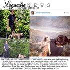 Logan Lerman : TI4U1404418750.jpg