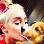 Miley Cyrus : miley-cyrus-1499220363.jpg